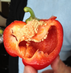 Funny Red Pepper